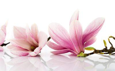 Kwiatowe wzory – zawsze modne
